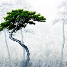 소나무1-3