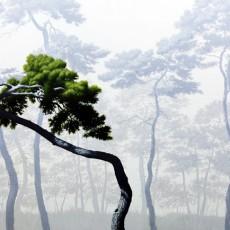 소나무-1