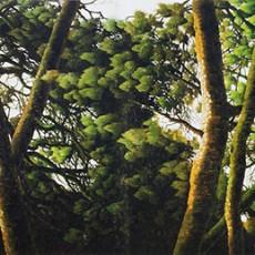 숙조투림(휴식을 취하러 숲에 들다)