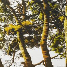 움직이는 나무