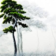 소나무1-1