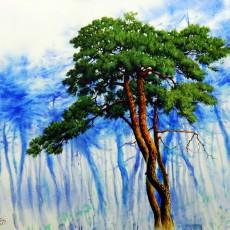 소나무 숲에서