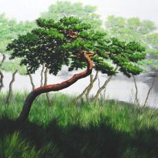 여름 솔 숲