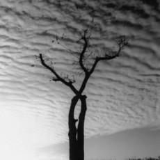 고독한 나무